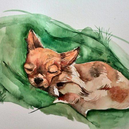 Spící čivava